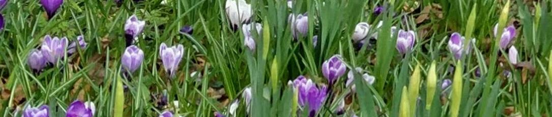https://chatparks.org.uk/wp-content/uploads/2021/03/spring_flowers.jpg